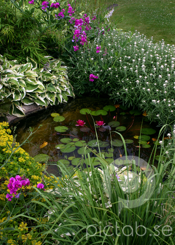 Trädgård trädgård damm : TrädgÃ¥rdsdamm - Pictab.se